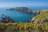 Gorse Blooming on the West of Coast of Sark with a View of the Island of Brecqhou Photographic Print by Michael Runkel