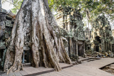 Ruins of the Ta Prohm Temple, Angkor, UNESCO World Heritage Site, Cambodia, Indochina Photographic Print by Yadid Levy
