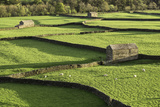 Barns and Dry Stone Walls at Gunnerside Photographic Print by John Woodworth