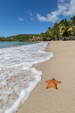 A Starfish Transported by Waves Lying Motionless on Carlisle Bay Photographic Print by Roberto Moiola
