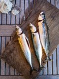 Mackerel Fish, Grebbestad, Bohuslan Region, West Coast, Sweden, Scandinavia, Europe Photographic Print by Yadid Levy