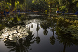 Reflections in Lily Pool, Jardin Majorelle, Owned by Yves St. Laurent, Marrakech, Morocco Photographic Print by Stephen Studd