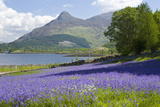Wild Bluebells (Hyacinthoides Non-Scripta) Beside Loch Leven Photographic Print by Ruth Tomlinson