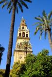 Patio De Los Naranjos, Mezquita Cathedral, Cordoba, Andalucia, Spain Photographic Print by Carlo Morucchio