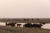 African Elephants (Loxodonta Africana), Chobe National Park, Botswana, Africa Photographic Print by Sergio Pitamitz