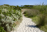 Sandy Path to the Beach, Scrub Plants and Pine Trees in the Background, Costa Degli Oleandri Photographic Print by Guy Thouvenin