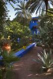 Jardin Majorelle, Owned by Yves St. Laurent, Marrakech, Morocco, North Africa, Africa Fotografisk tryk af Stephen Studd