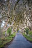 The Dark Hedges in Northern Ireland, Beech Tree Avenue, Northern Ireland, United Kingdom Reproduction photographique par Michael Runkel