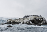 Chinstrap Breeding Colony at Point Wild, Elephant Island, South Shetland Islands, Antarctica Photographic Print by Michael Nolan