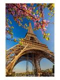 Eiffel Tower Bloom Twigs Paris Posters