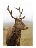 Deer During Foggy Morning Prints