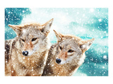 Coyote Pair & Blue Winter Sky Posters