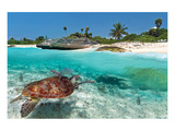 Beach With Green Turtle Mexico Posters