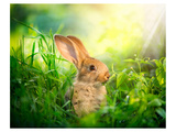 Cute Little Sunny Easter Bunny Posters