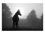 Arabian Horse in Grey Tones Poster