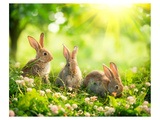Easter Bunnies in Sunny Meadow Poster