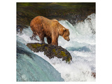 Alaska Brown Bear Fishing Prints