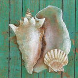 Conch Art by Janet Tava