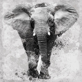 Proud Elephant Prints by Carol Robinson