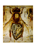 Anatomy of the Honey Bee, No.13, Pfurtscheller's Zoological Wall Chart Metal Print by Paul Pfurtscheller
