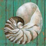 Nautilus Posters by Carol Robinson