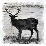 Birchbark Deer Posters by Carol Robinson