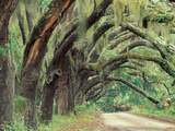 Live Oaks Covered in Spanish Moss and Ferns, Cumberland Island, Georgia, USA Metal Print by Art Wolfe