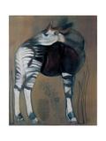 Okapi, 2005 Alu-Dibond von Mark Adlington