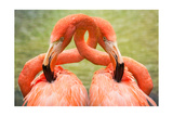 Flamingo Hug Art by  Lantern Press