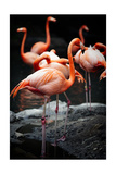 Flamingos Poster by  Lantern Press