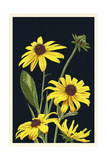 Black Eyed Susan - Letterpress Prints by  Lantern Press