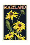 Maryland - Black Eyed Susan - Letterpress Print by  Lantern Press