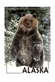 Alaska - Bear Standing in Snow Print by  Lantern Press