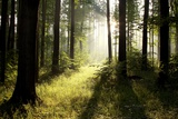 Spring Deciduous Forest at Dawn Photographic Print by  nature78