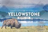 Yellowstone National Park - Bison Rubber Stamp Plakater av  Lantern Press