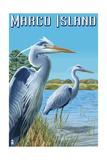 Marco Island - Blue Herons Print by  Lantern Press