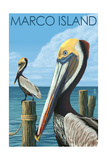 Marco Island - Pelicans Prints by  Lantern Press