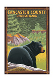 Lancaster County, Pennsylvania - Black Bear in Forest Art by  Lantern Press