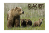 Glacier National Park - Grizzly Bear and Cubs Posters by  Lantern Press