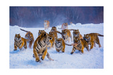 Tigers in Snow Posters by  Lantern Press