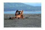 Grizzly Bear Waving Prints by  Lantern Press