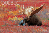 Quebec, Canada - Bull Moose in Flowers Art by  Lantern Press