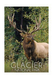 Glacier National Park - Elk Bull Art by  Lantern Press