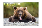 Glacier National Park - Grizzly Bear with Tongue Out Prints by  Lantern Press