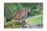 Yosemite National Park, California - Mountain Lion Posters by  Lantern Press