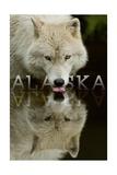 Alaska - Wolf Drinking Prints by  Lantern Press