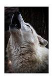 Wolf Howling Prints by  Lantern Press