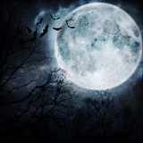 Halloween Background. Bats Flying in the Night with a Full Moon in the Background. Fotografisk tryk af  molodec
