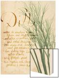 Herb Study II Wood Print by Grace Popp