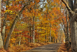 Fall Scenic Byway in Bucks County, Pennsylvania Photographic Print by  AardLumens